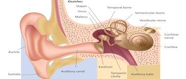 Audiology/Hearing Loss