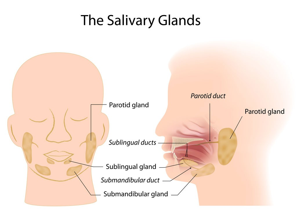 Salivary Gland Surgery and Sialendoscopy