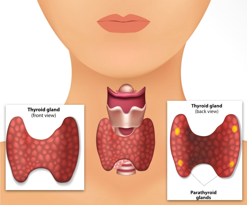 parathyroid surgery Otolaryngology Specialists of North Texas (OSNT)